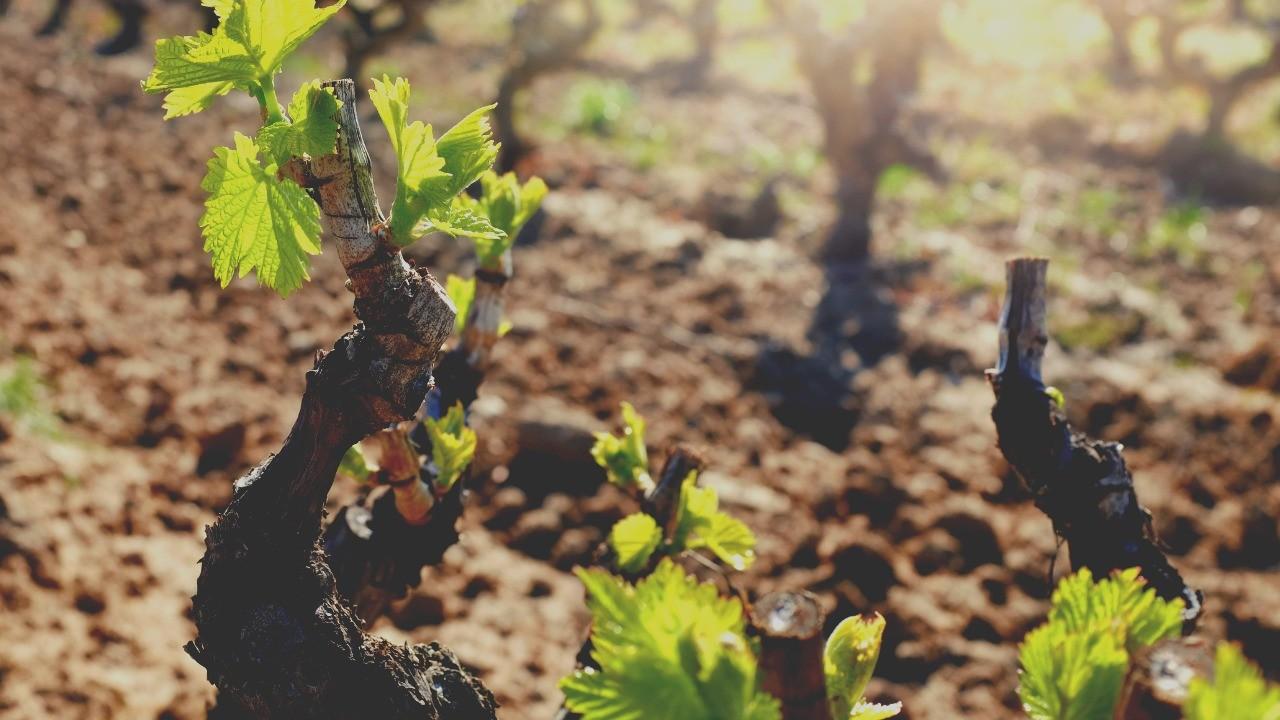 La vraie vigne Jean 15, 1-8. Antoine Nouis et Florence Taubmann